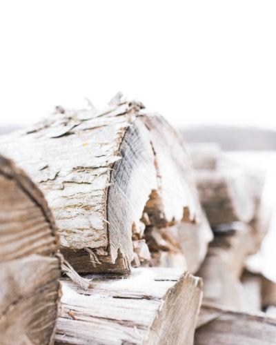 Dry rot treatment